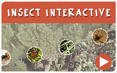 Insect Interactive